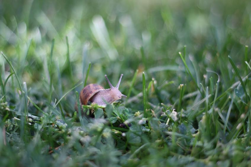 A Snail's Pace — Photo 4 — Project 365