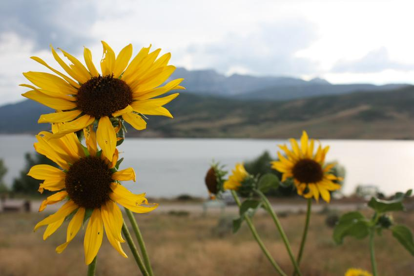 Sunflowers in the Mountains — Photo 14 — Project 365