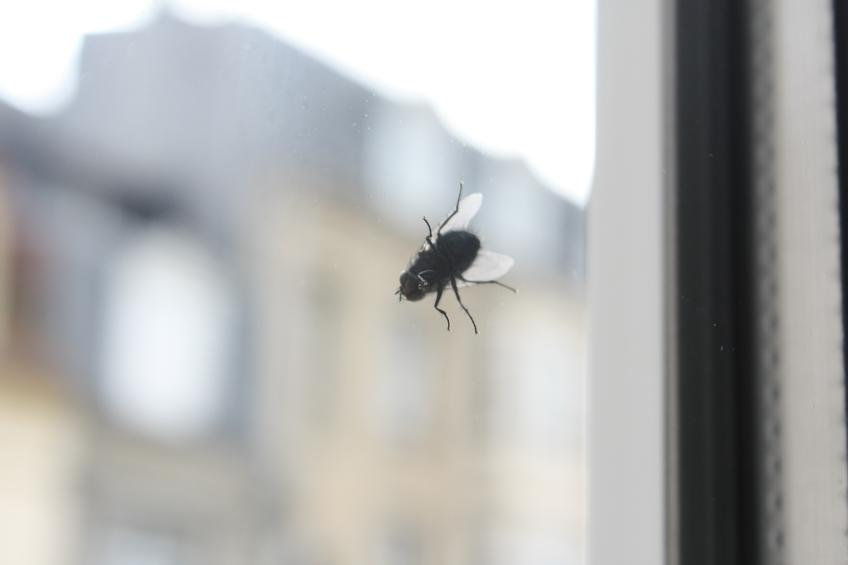 Fly on the Window — Photo 59 — Project 365